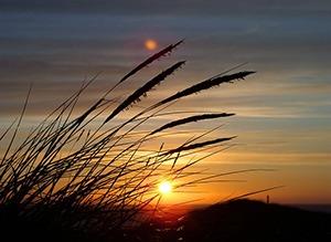 roseau coucher de soleil